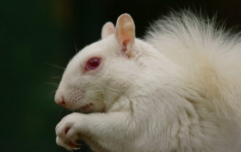 Albinism- What is it?