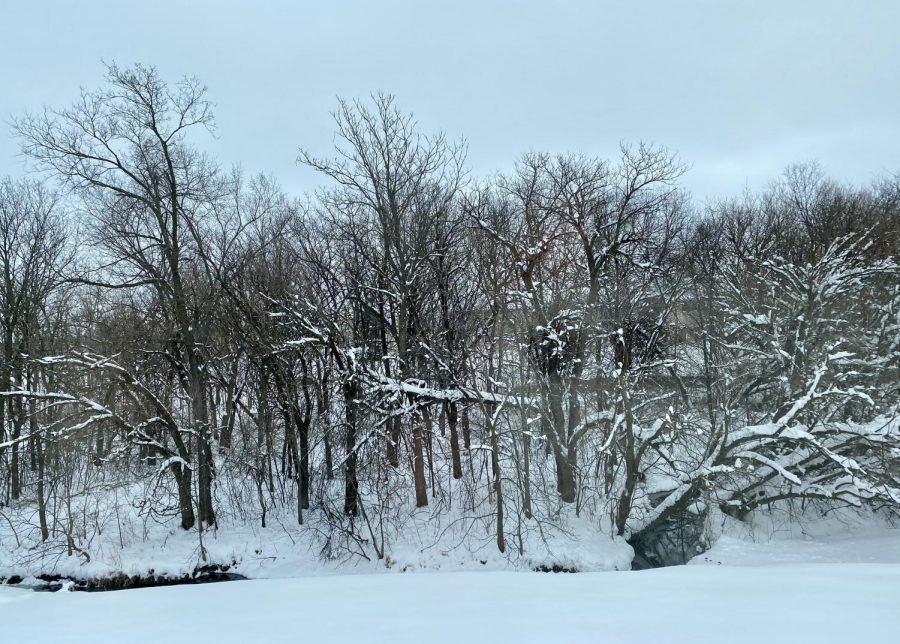 Snow fell all day on January 25th resulting in several snow days and nearly 14.5 inches. Location: Northeast Lincoln